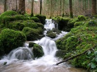 Stream in the Black Forest during spring timeyres/Flickr