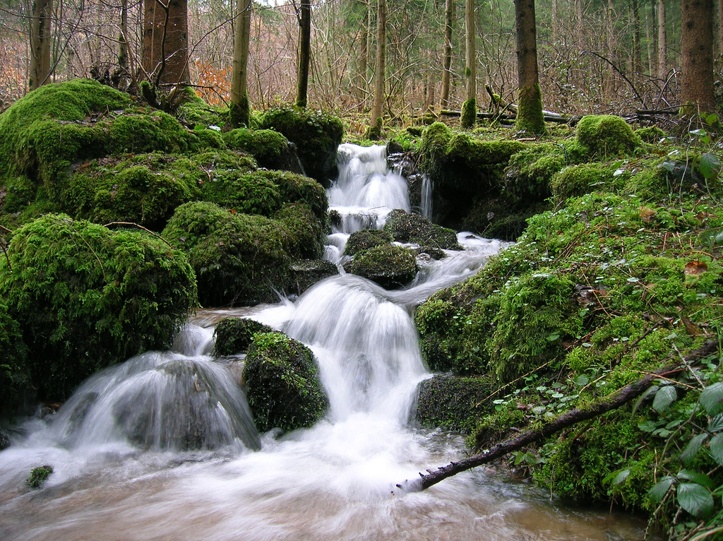 Stream in the black forest during spring timeyres flickr