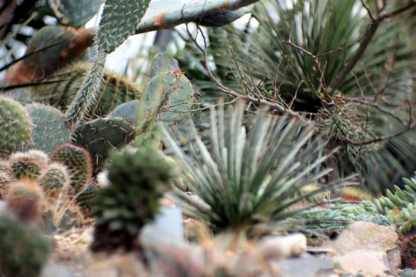 Cacti at the Rombergpark angthase./Flickr